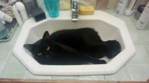 lola lavabo